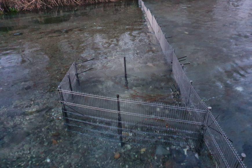 Installati accessi selettivi sul Rio Caprionero (Volturno)